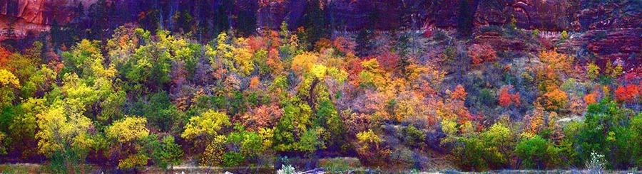Zion Autumn Solitude John Murk Photography